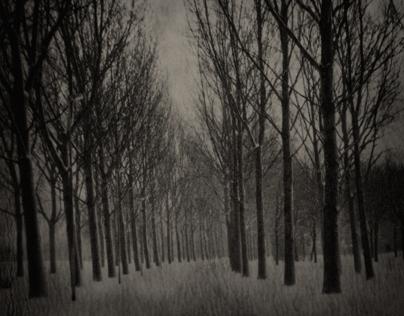 Landscapes VII