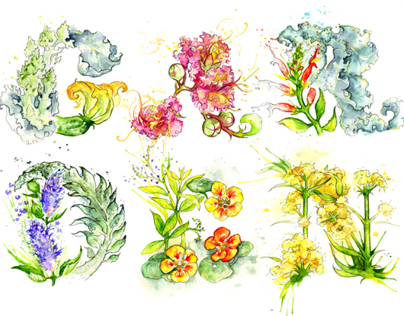 A Michelin Star GARDEN // Typography & Illustrations