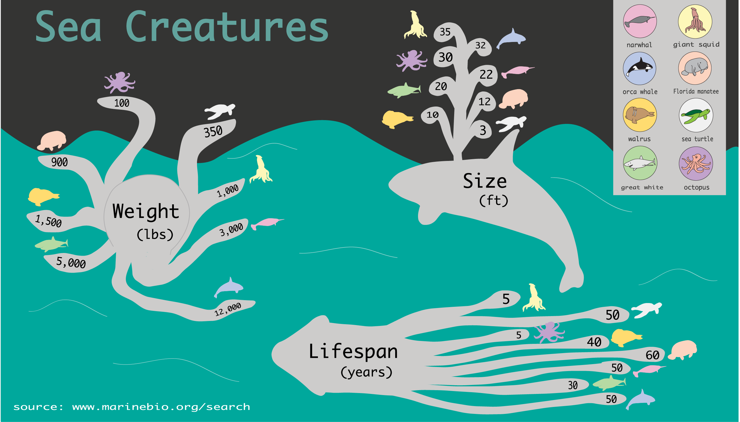 Sea Creatures Infographic