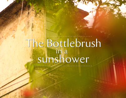 The Bottlebrush in a sunshower