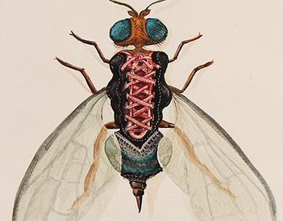 Urban Bugs