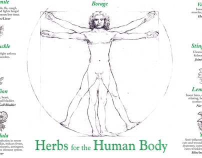 Herbs & The Human Body