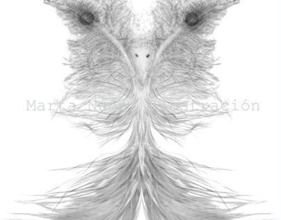 Feathers Bird Digital Illustration