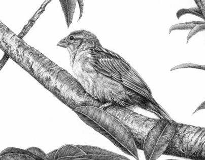 Birds - pencil drawings - 3