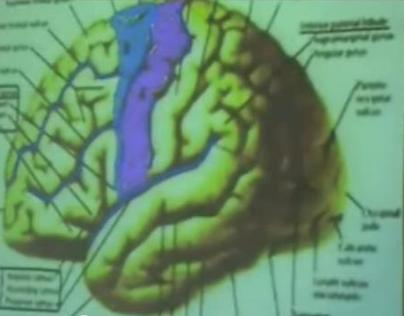 Brain Functional Areas1-Frontal Lobe – Sanjoy Sanyal