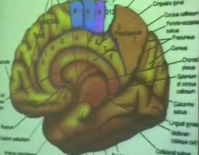 Brain Functional Areas1-Occipital Lobe – Sanjoy Sanyal