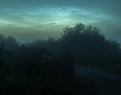 Fog & Nature at Night