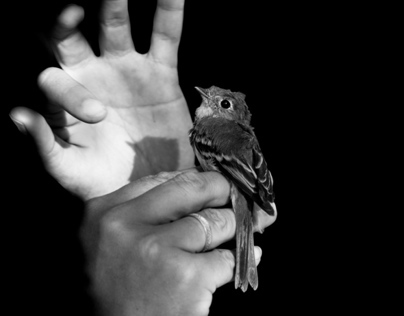 Bird in Hand · Photography