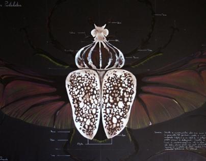 Entomology of Goliathus Beetle