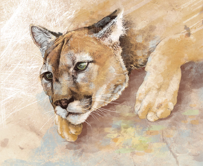 Snail's Pace Mountain Lion Illustration - Note Card
