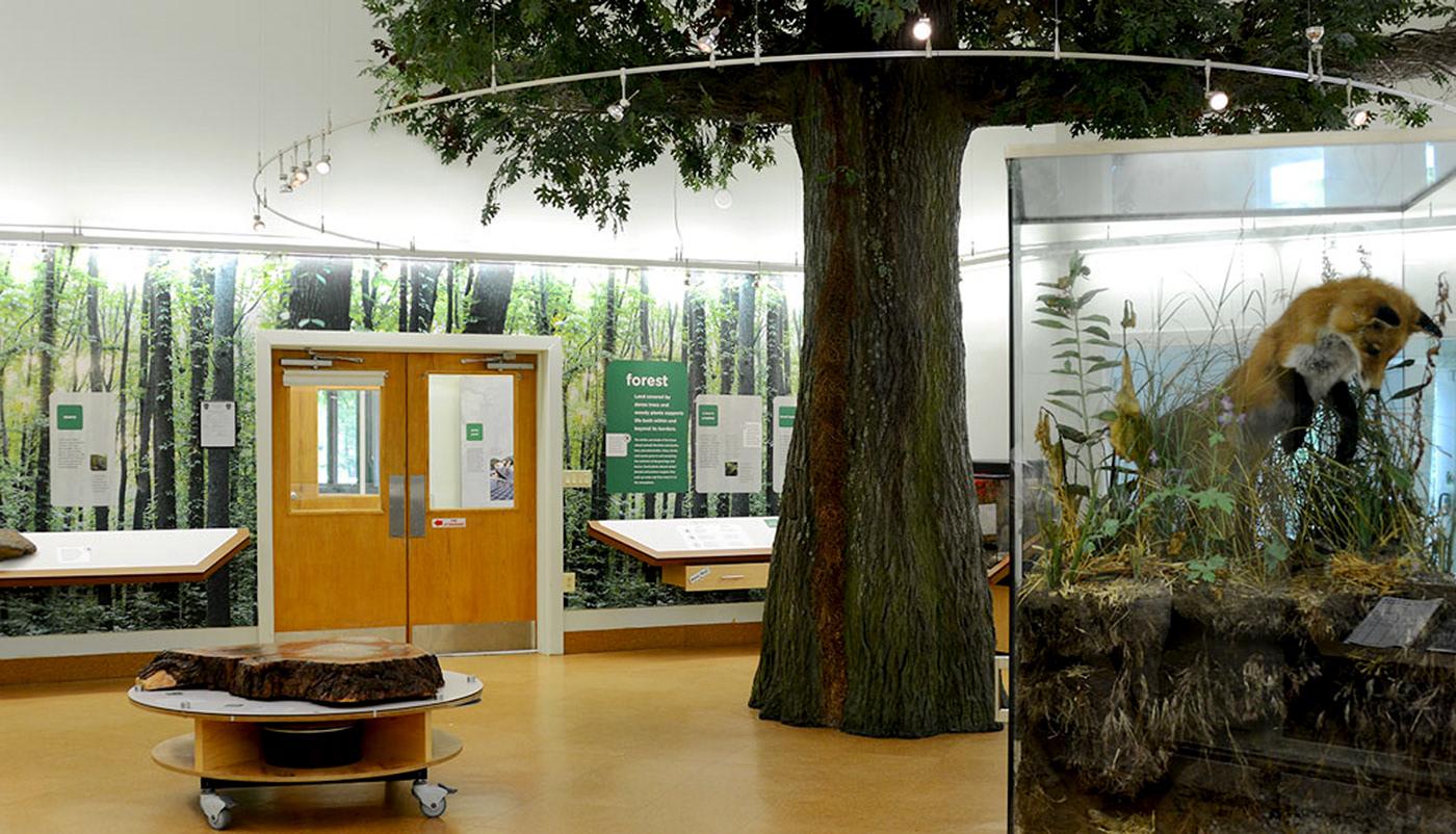 Nature Center Exhibit