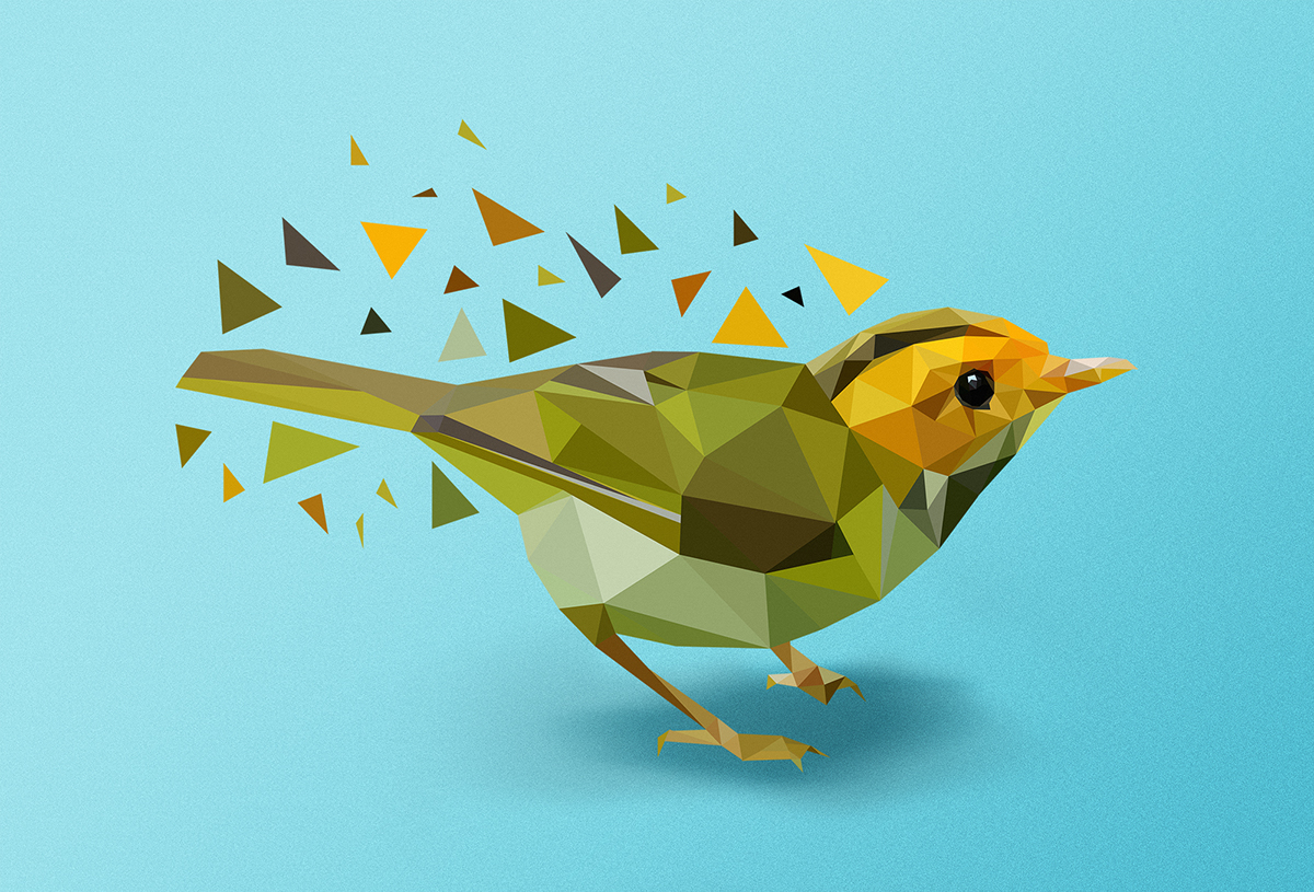 Vector bird illustration process