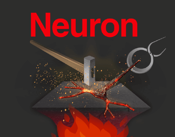 Neuron Cover Art | Scientific Magazine