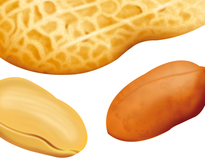 Peanut Illustration