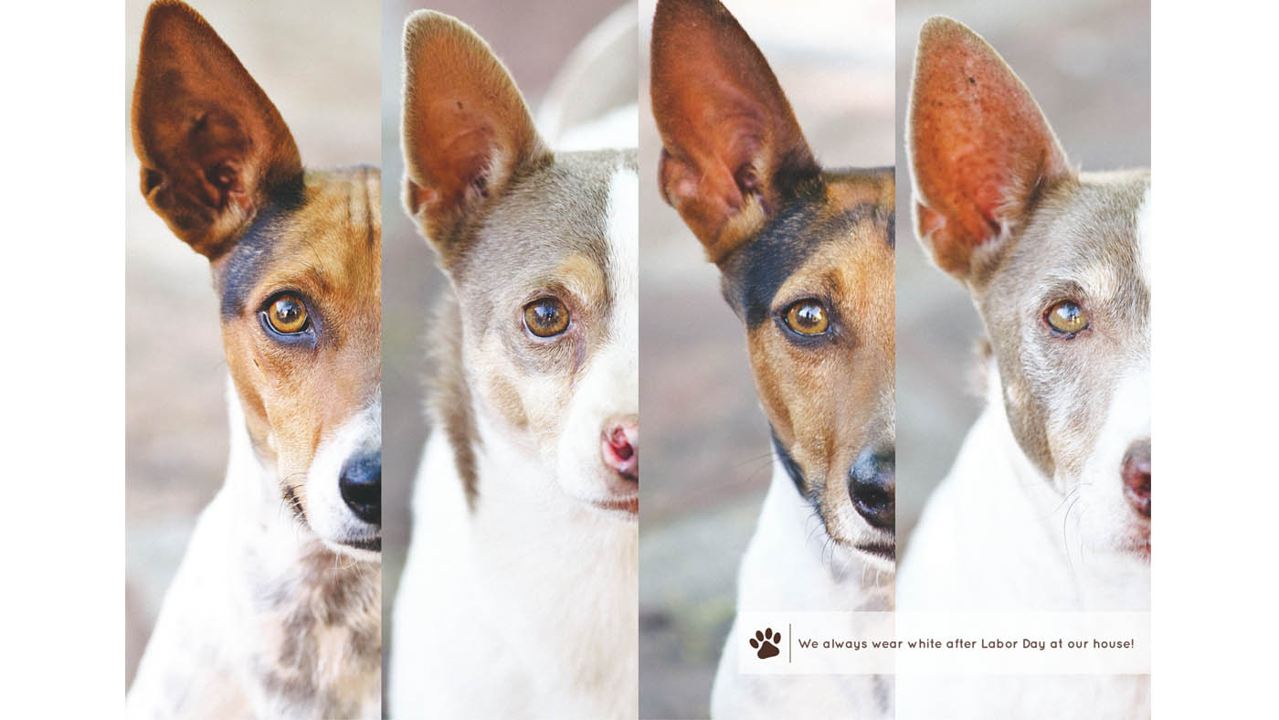 Humane Society of Southern Arizona 2014 Calendar