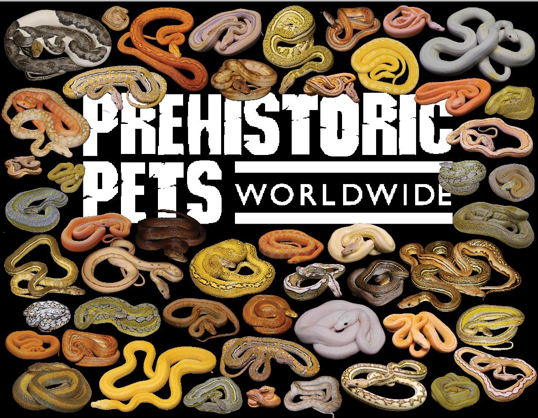 PrehistoricPets.com Worldwide: Promotional Materials